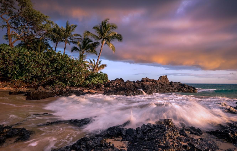 Фото обои пляж, тропики, пальмы
