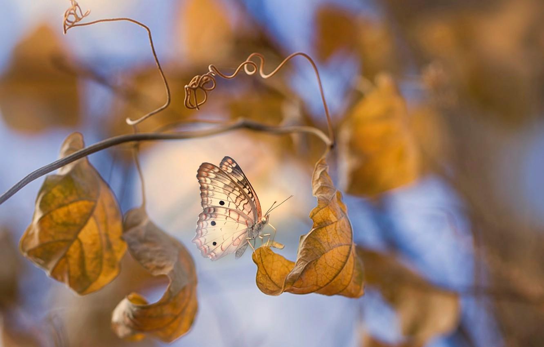Фото обои осень, листья, макро, ветки, бабочка, Eleonora Di Primo
