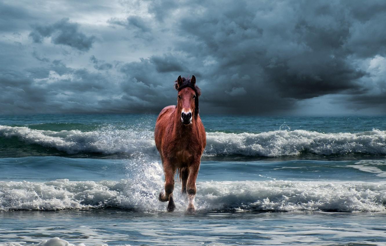 лошадь бегущая по волнам картинка тут