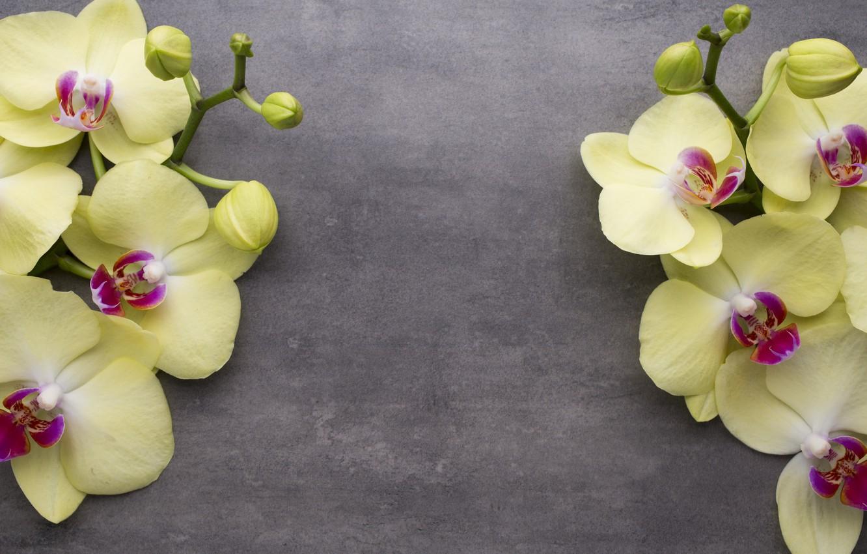 Фото обои цветок, фон, ветка, орхидея, желтая