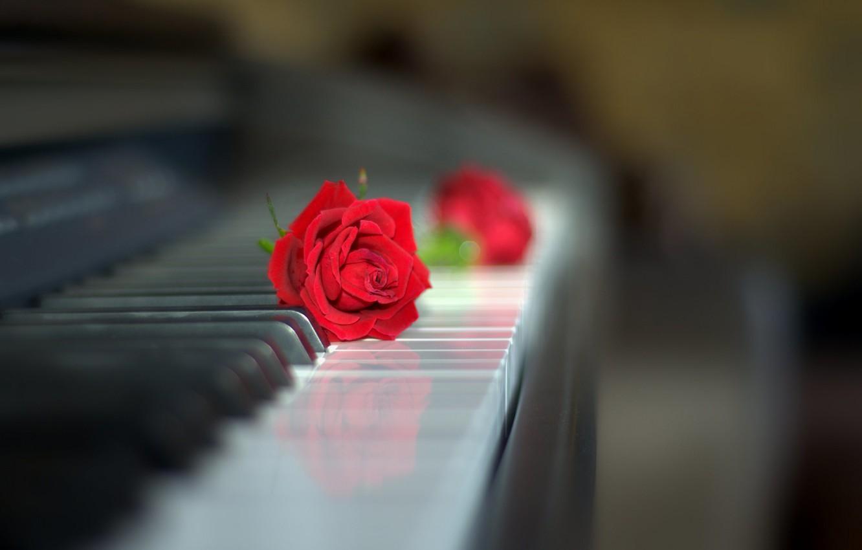 Фото обои стиль, роза, бутон, клавиатура, красная роза, пианино, боке