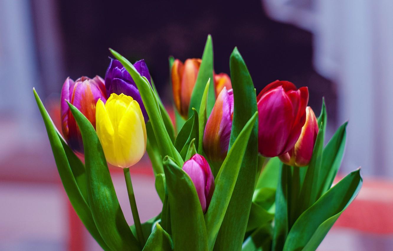 Фото обои листья, букет, весна, лепестки, тюльпаны