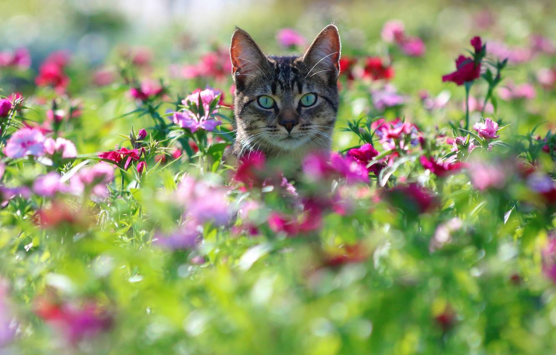 Обои цветы, Кошка. Кошки foto 8