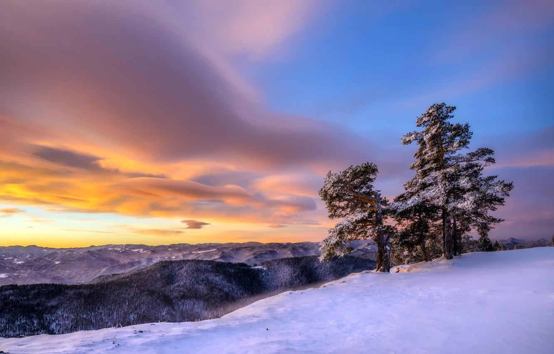 Фото обои зима, деревья, закат