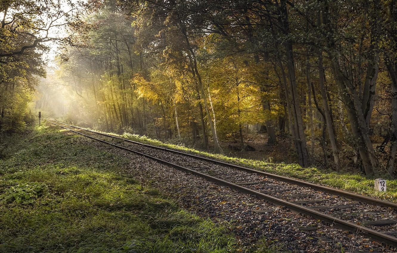 случаем, картинки темный фон лес железная дорога старалась