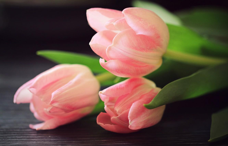 Фото обои тюльпаны, трио, бутоны