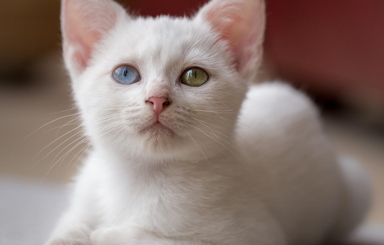 фото только белых кошечек уходом