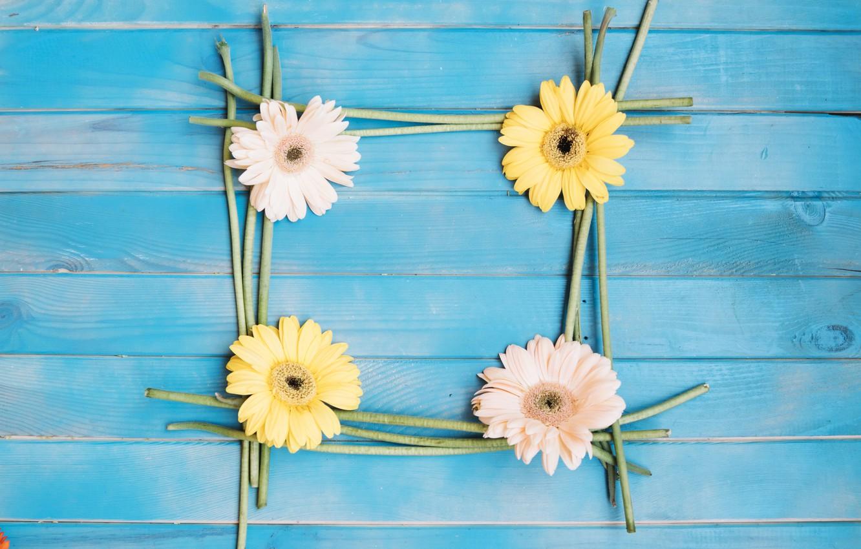 Фото обои цветы, фон, colorful, герберы, wood, flowers, spring, gerbera
