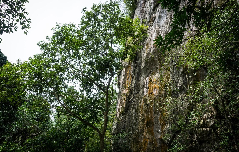Фото обои green, forest, nature, hill, sleeping, buddha, malaysia, lembing, sungai, sungai lembing