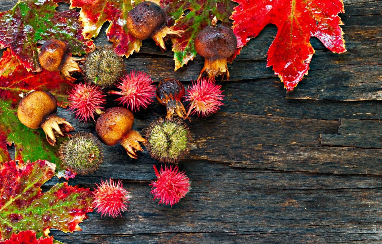 Фото обои осень, листья, капли, древесина, каштаны