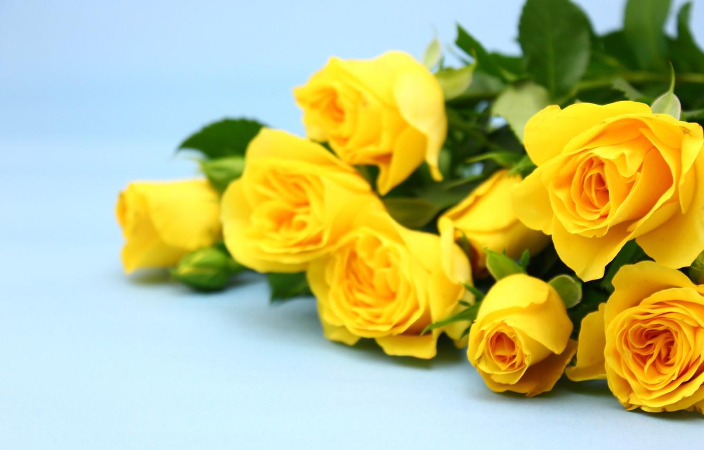 Фон для открытки желтые розы, поздравления свадьбой красивые