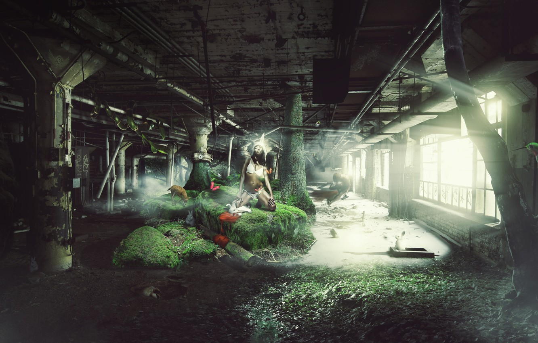 Фото обои девушка, зайцы, Rabbit, BossLogic, Chasing, The White