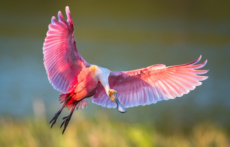 Крыло птицы фотографии