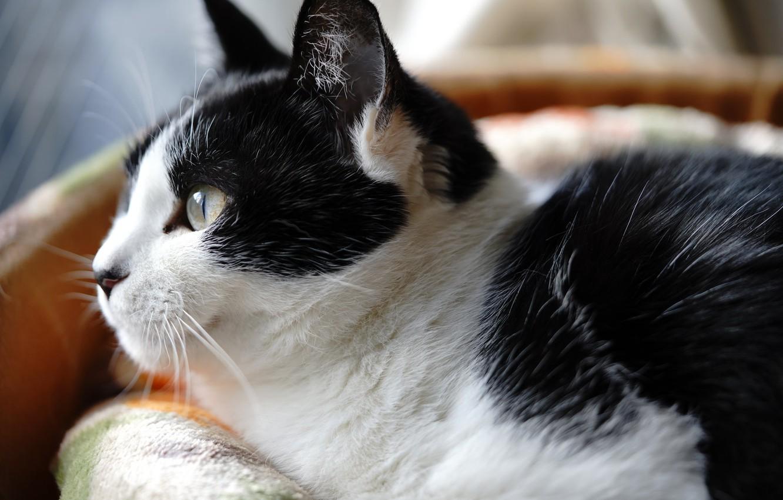 Фото обои глаза, кот, усы