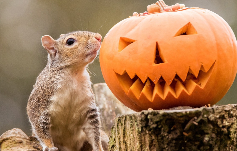 Фото обои пень, белка, тыква, Хеллоуин