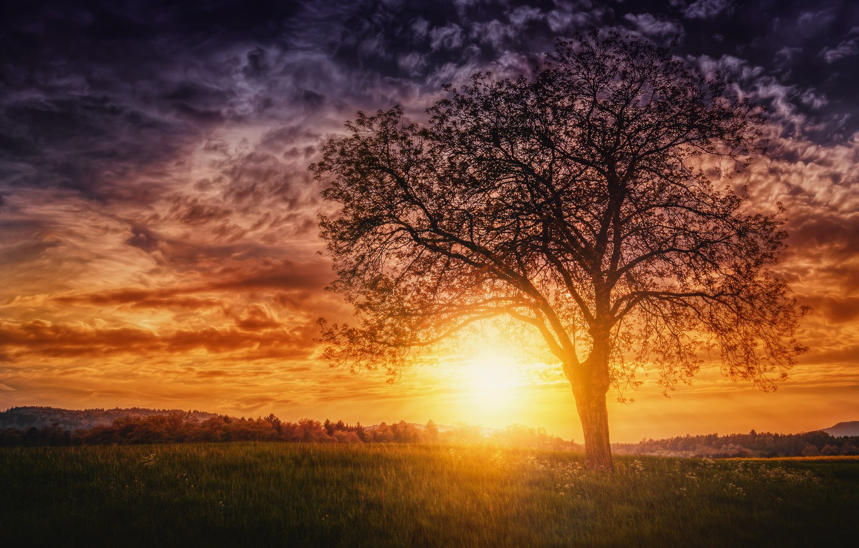 Фото обои солнце, закат, дерево, вечер