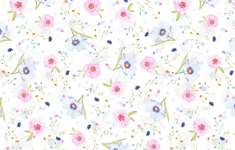 Фото обои фон, лепестки, цветочки, маргаритки