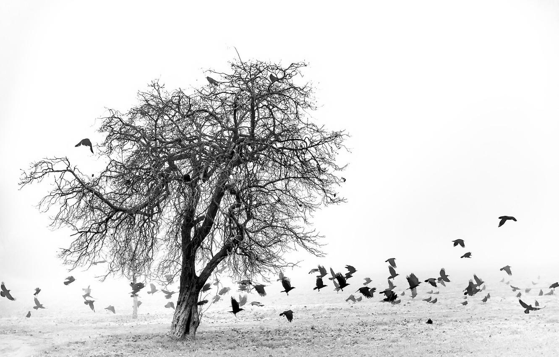 Фото обои поле, птицы, туман, дерево
