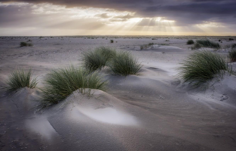 Фото обои небо, трава, дюны