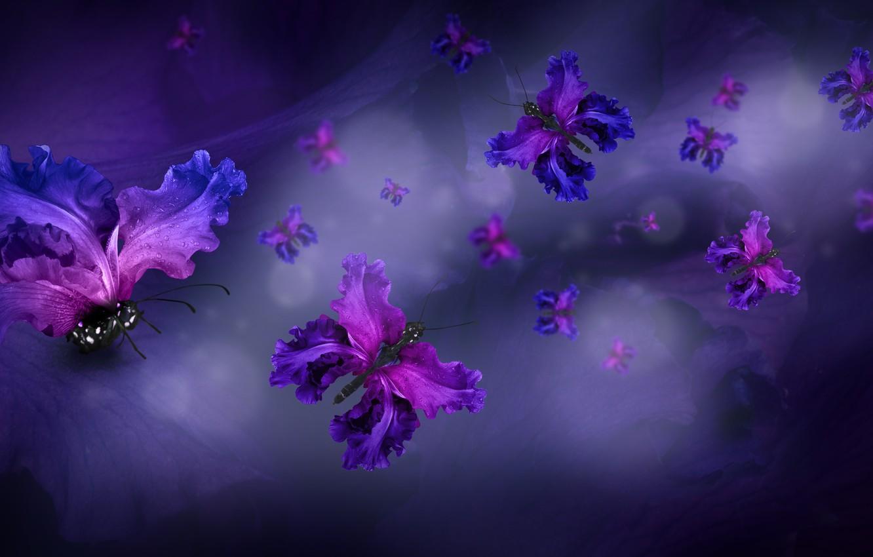 Фото обои бабочки, лепестки, water, purple, butterflies, floral
