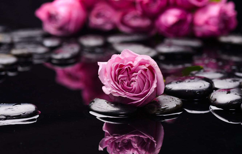 Фото обои вода, камни, роза, бутоны