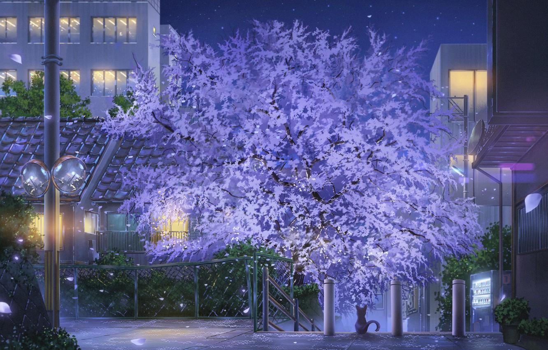 Фото обои кот, город, дерево, улица, весна
