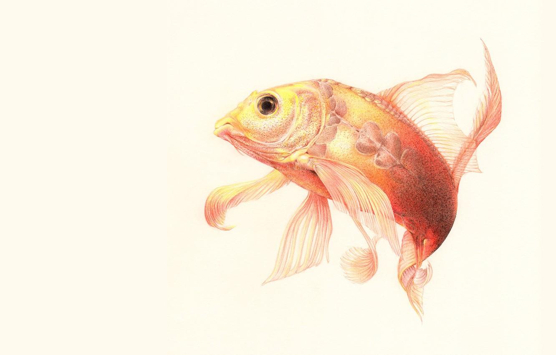 Фото обои рыбка, арт, изгиб, плавники