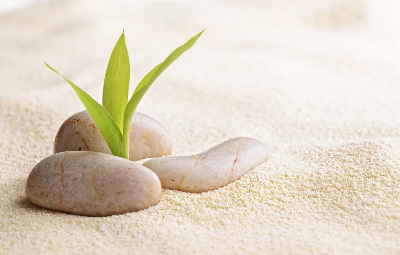 Фото обои песок, росток, спа камни