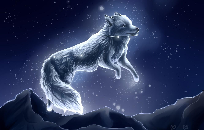 Фото обои снег, ночь, волк, by SnoSwirl