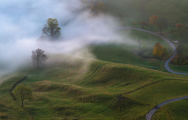 Фото обои осень, деревья, природа, туман, утро, луга
