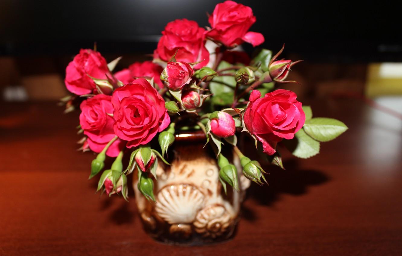 Фото обои цветок, роза, красная роза