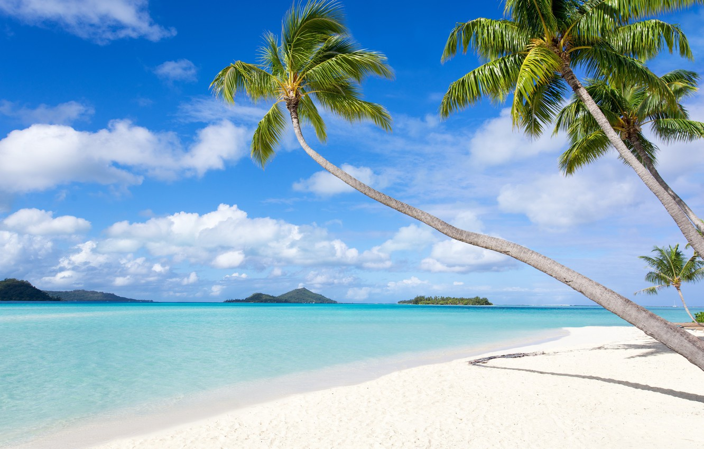 Фото обои море, пляж, лето, природа, тропики, пальма, отдых, берег