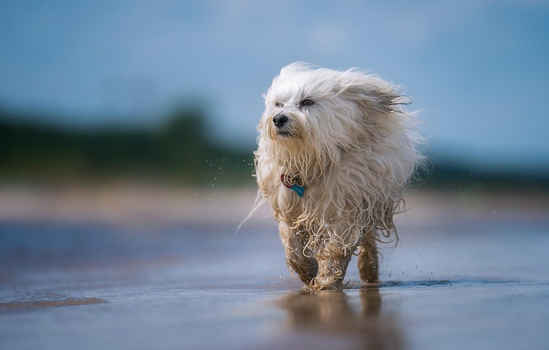 Картинка лохматого пса