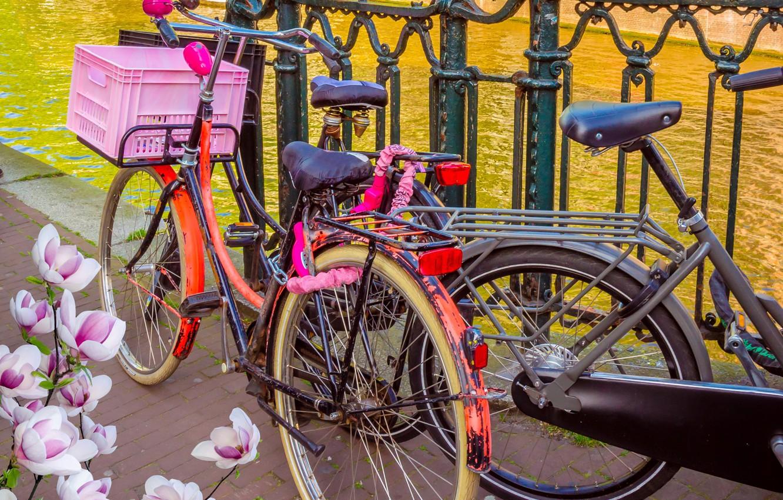Фото обои велосипед, река, весна, Амстердам, bicycle, цветение, bike, blossom, Amsterdam, flowers, old, spring, buildings, Netherlands, canal