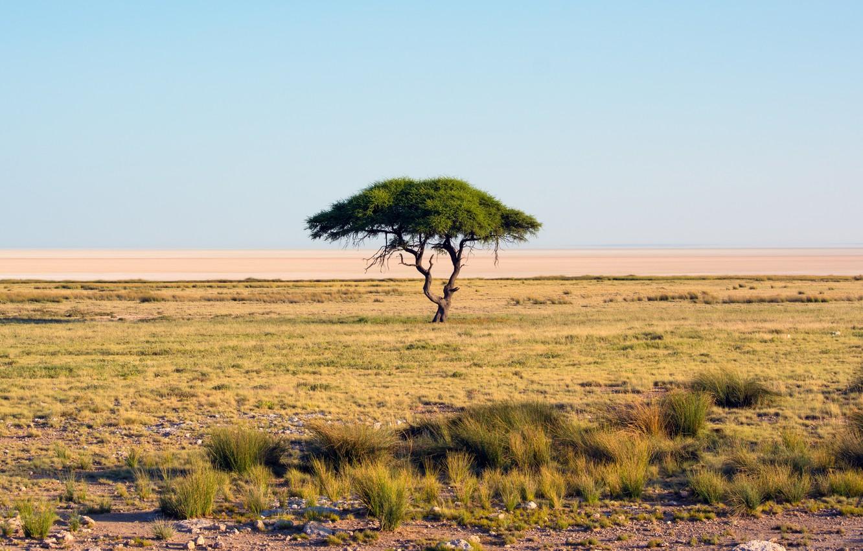 Фото обои песок, трава, дерево, пустыня, засуха, саванна, Африка, оазис, multi monitors, Namibia, Etosha National Park, ultra …