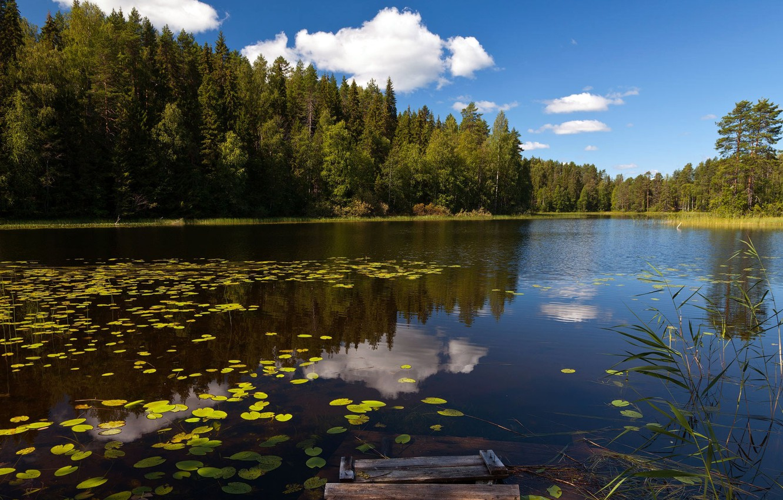 картинки на рабочий стол природа лес озера реки облака действительно