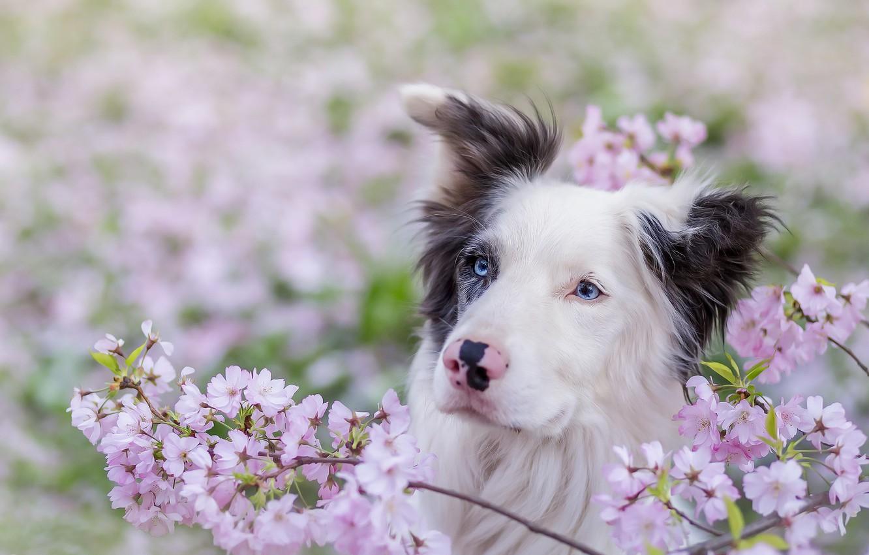 весна картинки с собаками время это