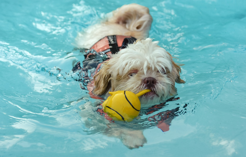 Фото обои вода, игрушка, собака