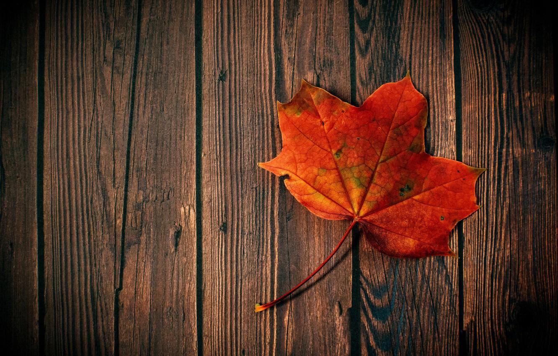 Фото обои осень, hdr, древесина, кленовый лист, лист клена