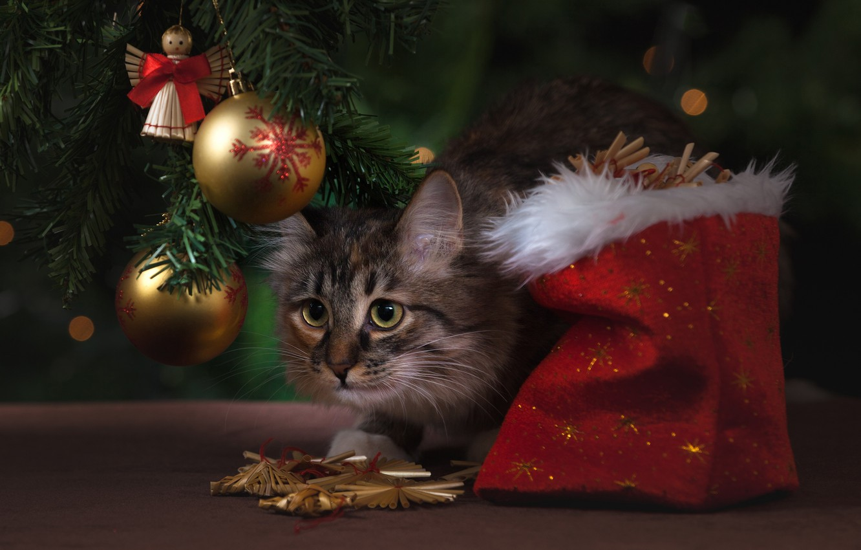 Фото обои кошка, кот, шарики, украшения, шары, игрушки, Рождество, Новый год, ёлка, мешок