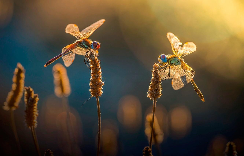 Фото обои трава, солнце, блики, боке, стрекозы
