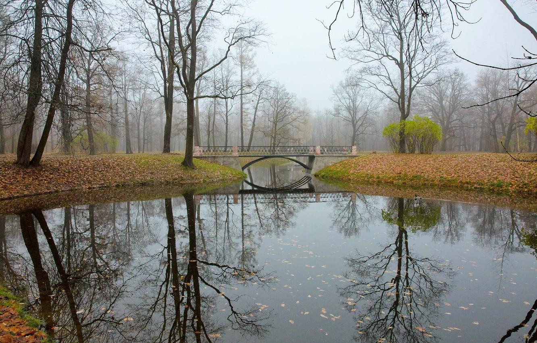 Фото обои осень, мост, отражение, речка, Царское Село
