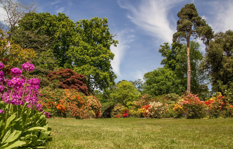 позволяйте обои англия лес с цветами фото больше