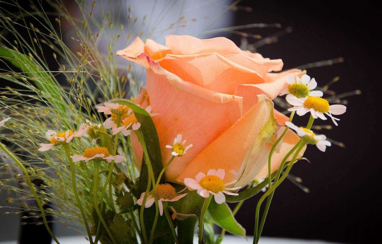 активная панорама картинки розы с ромашками словосочетанием руководители региона