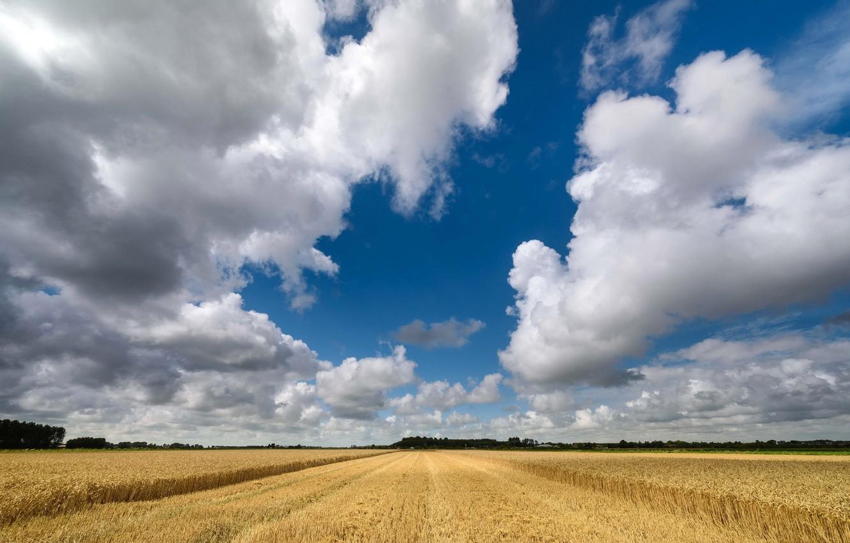 Обои лето, Облака, Дирксланд, нидерланды. Пейзажи foto 6