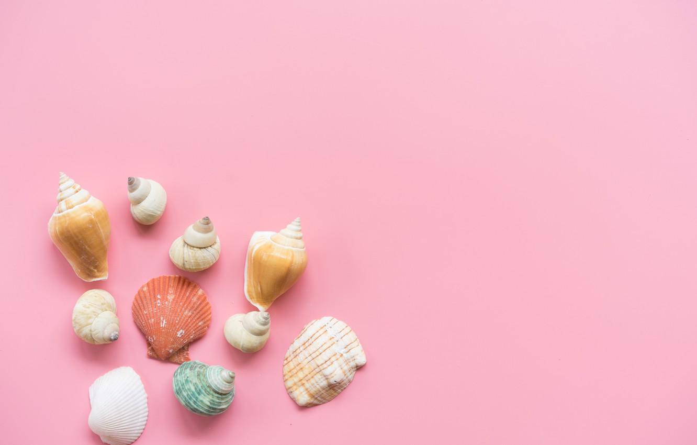 Фото обои фон, розовый, ракушки, pink, background, marine, seashells