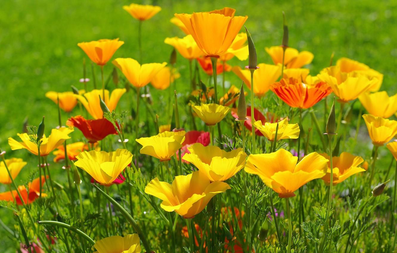 картинки с июльскими цветами маленький принц плече