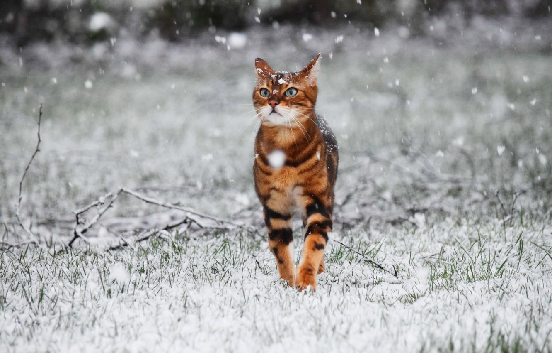 Кошки и снег картинки
