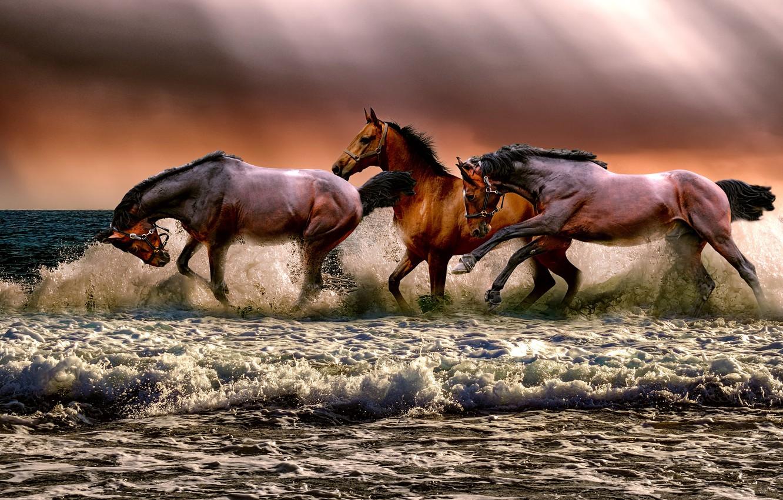 Обои свет, лошадь, тройка, Цвет. Абстракции foto 17