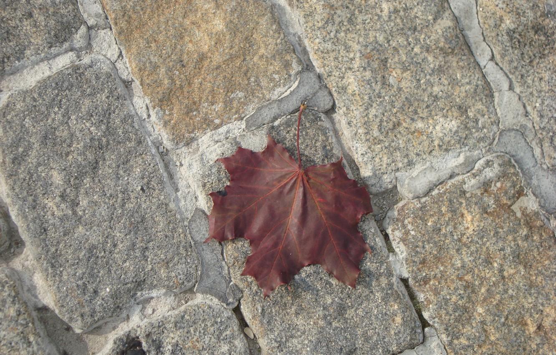 Фото обои осень, лист, большой город